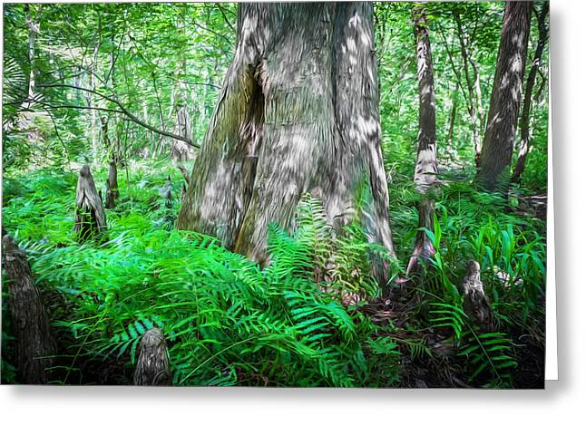 Old Growth Cypress Cypress Knees Greeting Card by Rich Franco