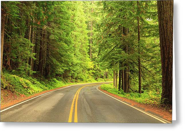 Old Growth Forest At Grove Greeting Card