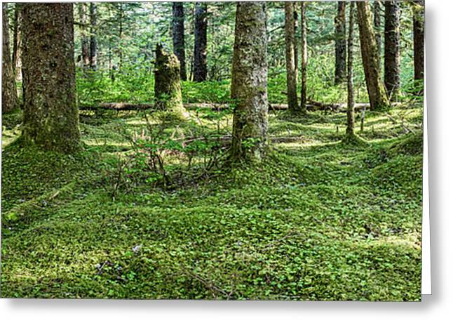 Old Growth Forest, Tongass National Greeting Card by Panoramic Images
