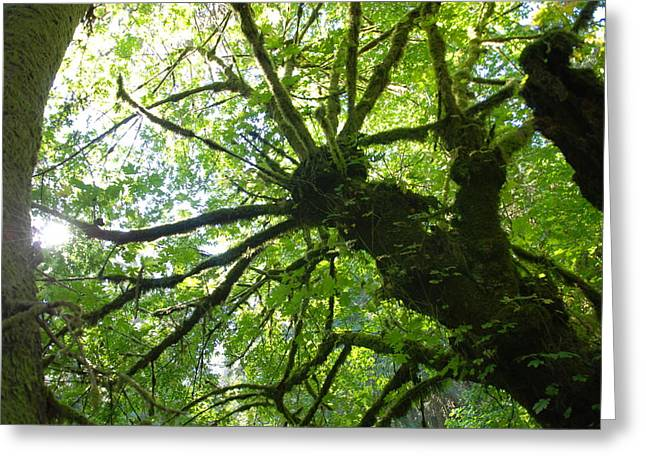 Old Growth Tree In Forest Greeting Card