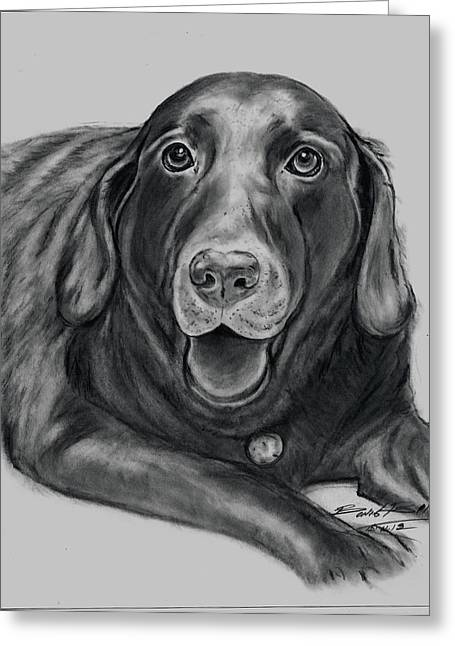 'old Gus' Greeting Card by Barb Baker