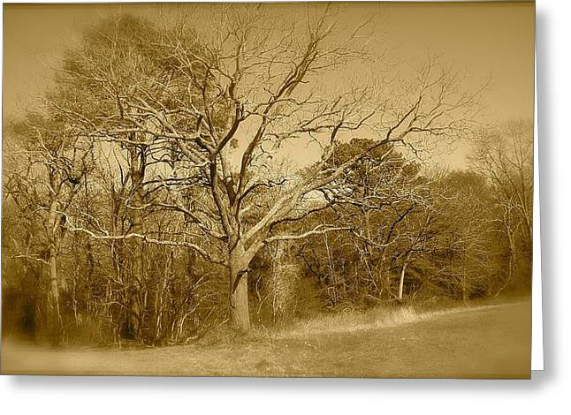 Old Haunted Tree In Sepia Greeting Card by Amazing Photographs AKA Christian Wilson