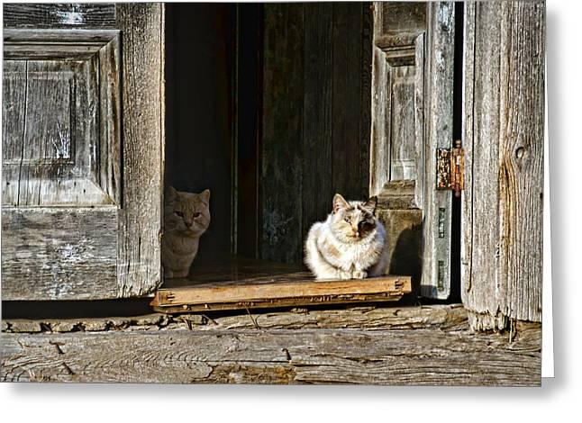 Old Knox Church Cats Greeting Card by Nikolyn McDonald