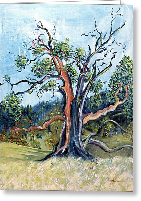Old Madrone Tree In November  Greeting Card