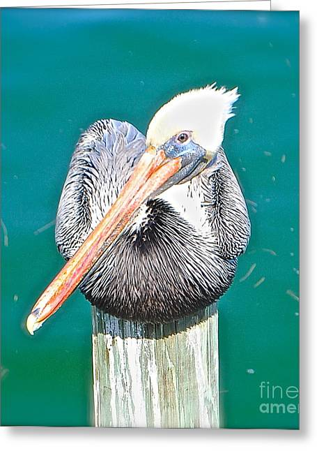 Old Man Pelican On Anna Maria Pier Greeting Card