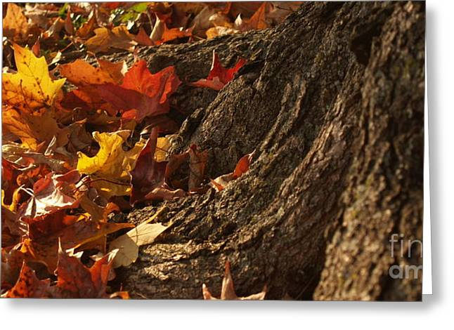Old Maple Roots In Backlit Autumn Greeting Card