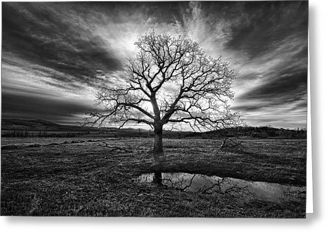 Old Oak Greeting Card by Aaron Thompson