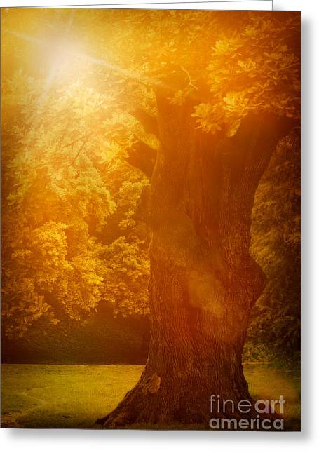 Old Oak Tree Greeting Card by Mythja  Photography