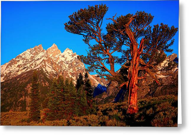 Greeting Card featuring the photograph Old Patriarch by Aaron Whittemore