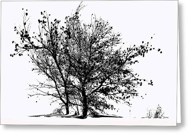Old Pine Memory Greeting Card by Carla Hamelin