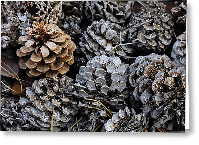 Old Pinecones Greeting Card by Kae Cheatham