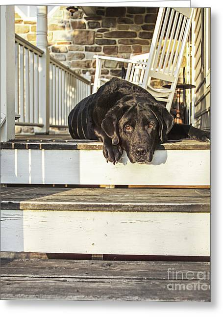 Old Porch Dog Greeting Card by Diane Diederich
