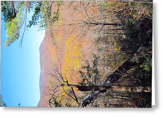 Old Rag Hiking Trail - 121215 Greeting Card by DC Photographer