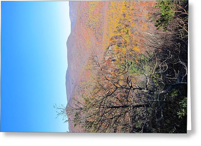 Old Rag Hiking Trail - 121223 Greeting Card by DC Photographer