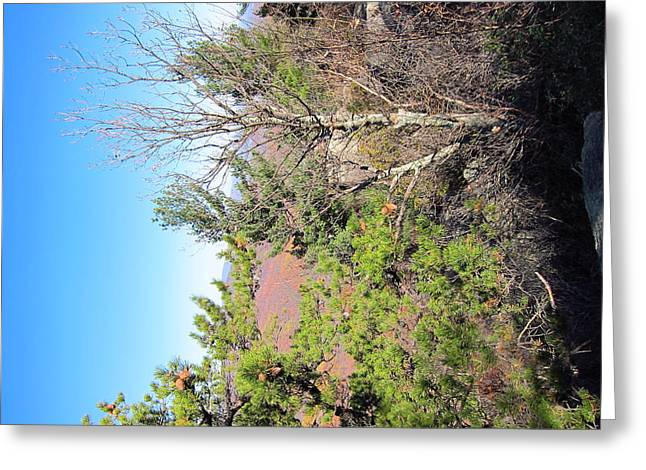 Old Rag Hiking Trail - 121226 Greeting Card by DC Photographer