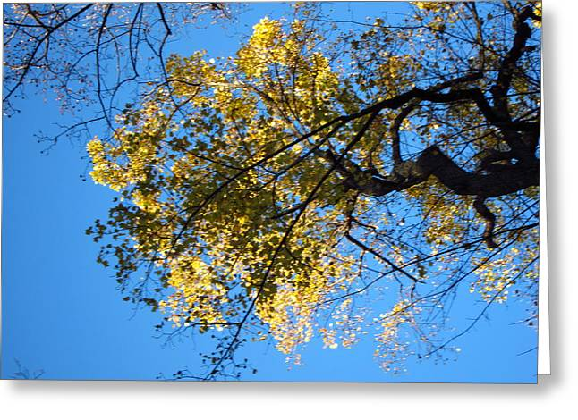 Old Rag Hiking Trail - 121255 Greeting Card by DC Photographer