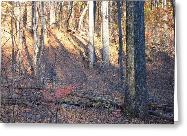 Old Rag Hiking Trail - 121263 Greeting Card by DC Photographer