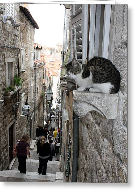 Old Town Alley Cat Greeting Card by David Nicholls