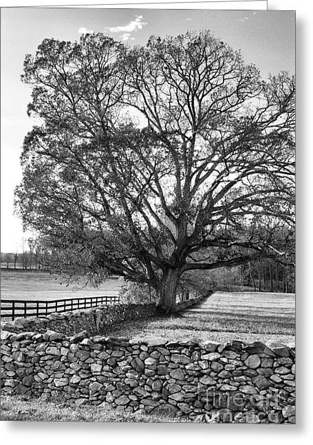 Greeting Card featuring the photograph Old Tree In Black And White by John S