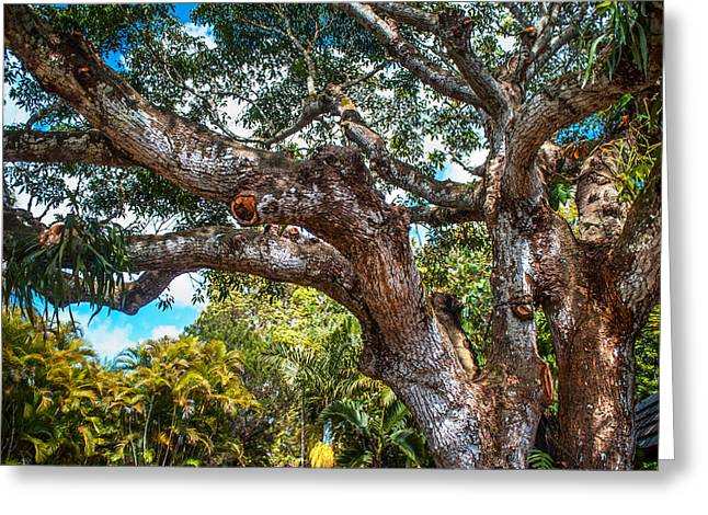 Old Tree In Eureka. Mauritius Greeting Card by Jenny Rainbow