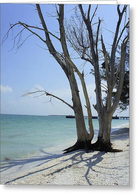 Greeting Card featuring the photograph Old Tree by Laurie Perry