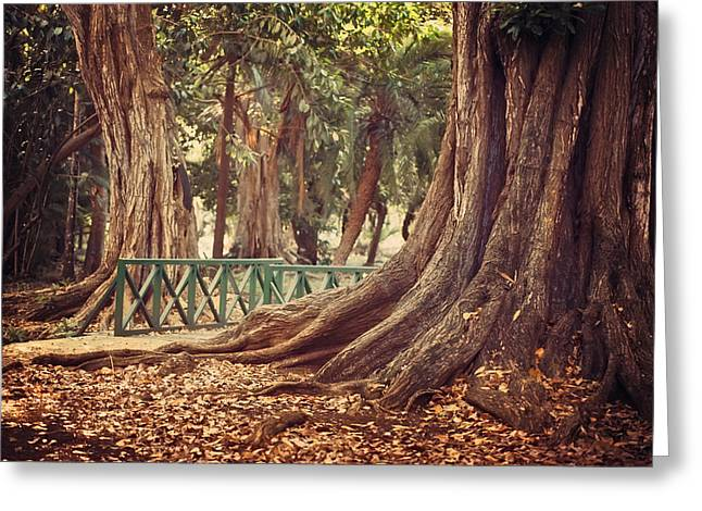 Old Trees In Pamplemousse Garden. Mauritius Greeting Card