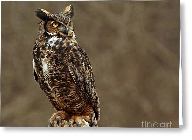 Old Wise One  Greeting Card by Inspired Nature Photography Fine Art Photography