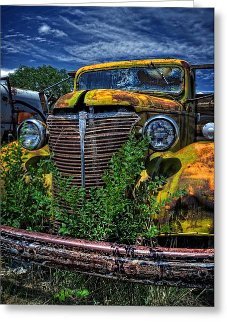 Greeting Card featuring the photograph Old Yeller by Ken Smith