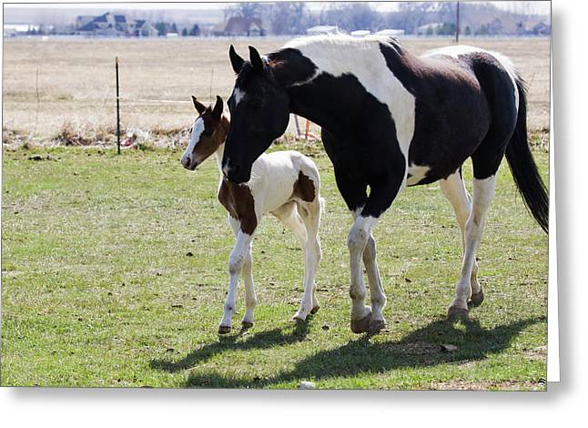 Oldenburg Warmblood Mare And Filly Greeting Card by Piperanne Worcester