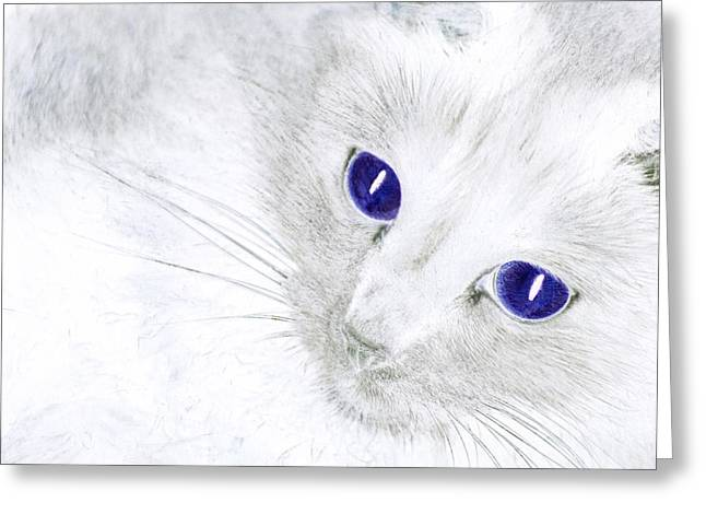 Ole Blue Eyes Greeting Card by Camille Lopez