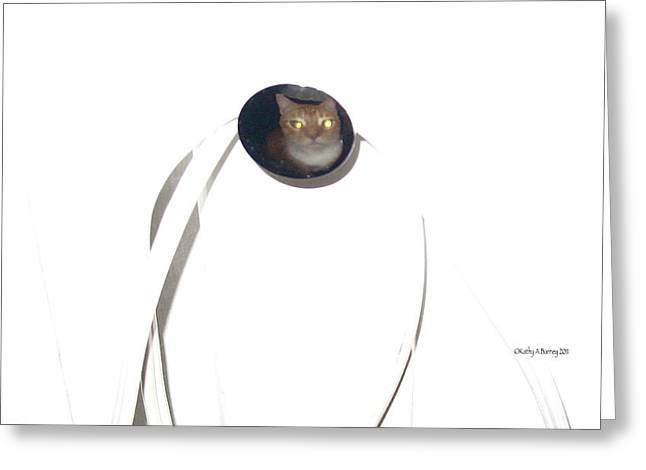 Olga Cat Reflected In Drawer Knob Greeting Card by Kathy Barney