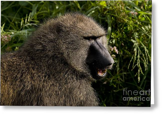 Olive Baboon   #0685 Greeting Card