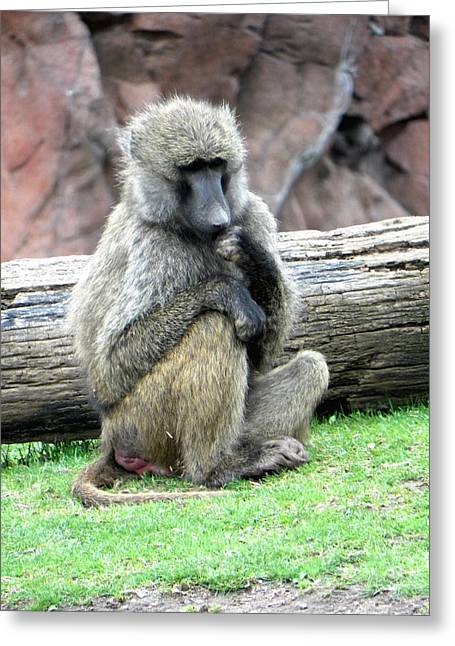 Olive Baboon Greeting Card by Michael Caron