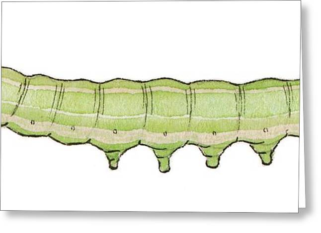 Olive Caterpillar Greeting Card by Mikkel Juul Jensen
