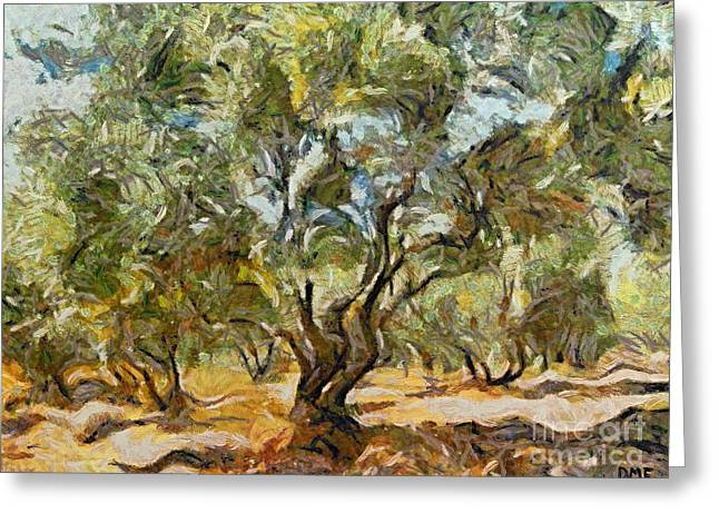 Olive Grove Greeting Card by Dragica  Micki Fortuna