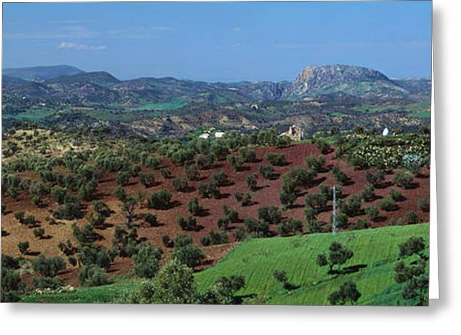 Olive Groves Andalucia Spain Greeting Card