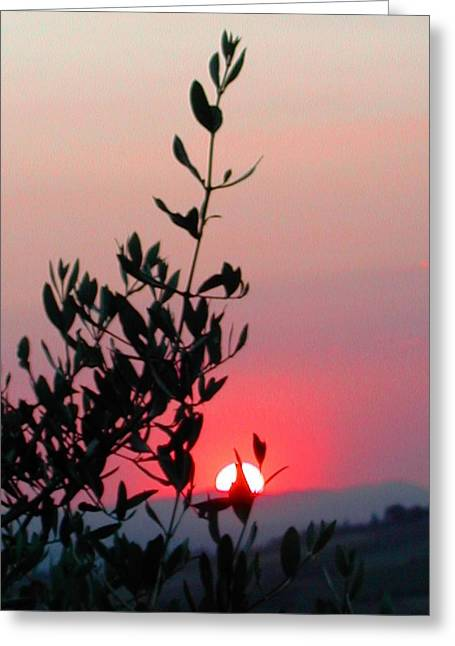 Olive Tree At Sunset Greeting Card by Dorothy Berry-Lound