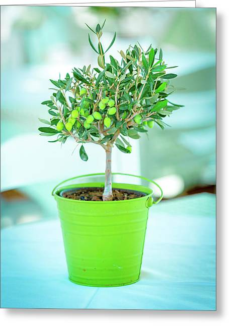 Olive Tree In A Green Pot Greeting Card by Wladimir Bulgar