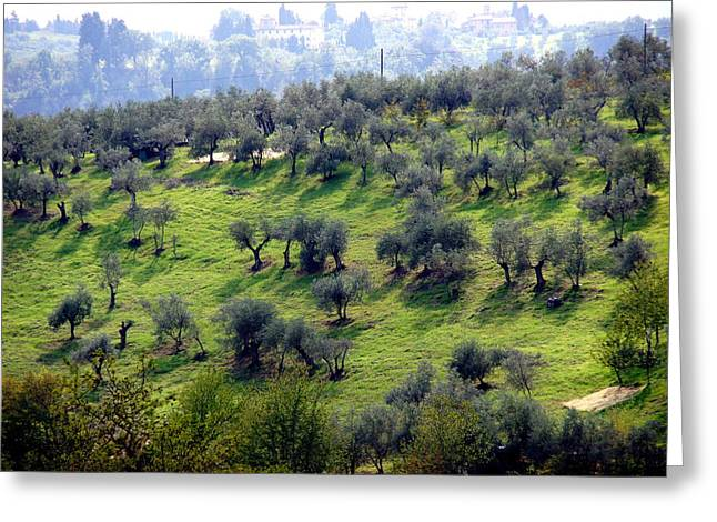 Olive Trees And Shadows Greeting Card