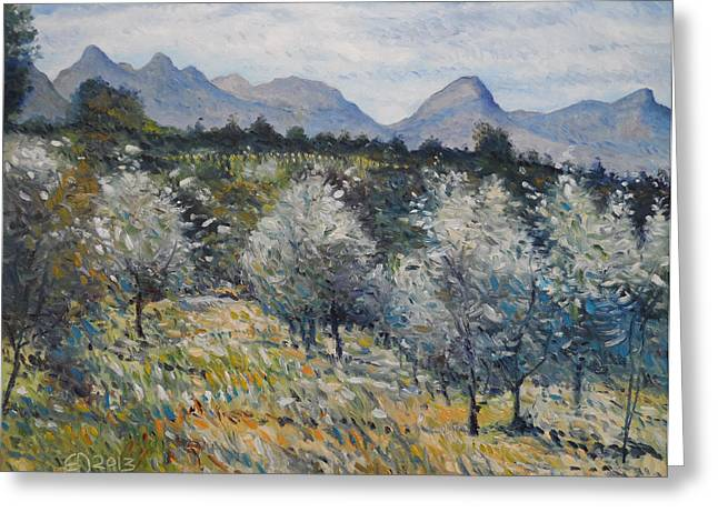 Olives At Diemersfontein Cape South Africa. Greeting Card by Enver Larney