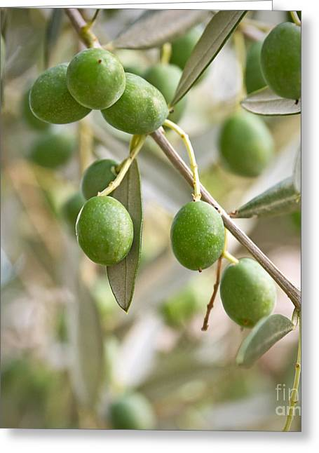 Olives Greeting Card by Delphimages Photo Creations