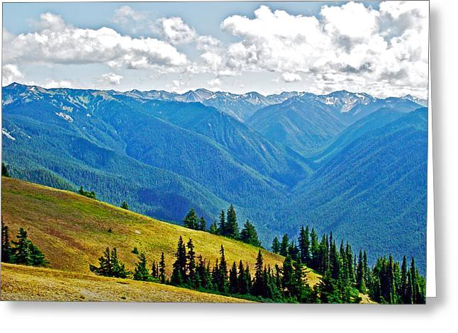 Olympic Mountains From Hurricane Ridge In Olympic National Park-washington Greeting Card