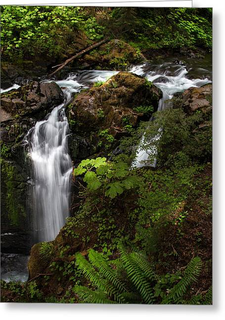 Olympic National Park Greeting Card by Larry Marshall