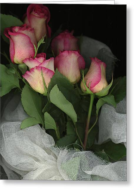 Ombre Tea Rose On Black Background Greeting Card by Anna Miller