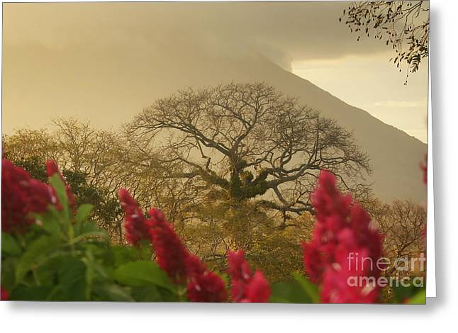 Ometepe Island 2 Greeting Card by Rudi Prott