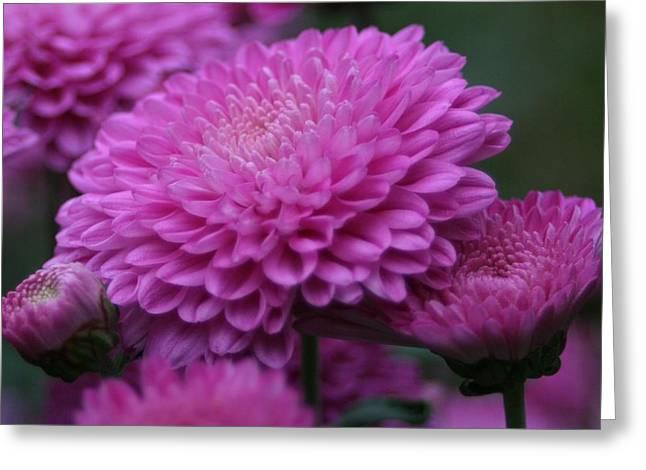 Omg Pink Greeting Card