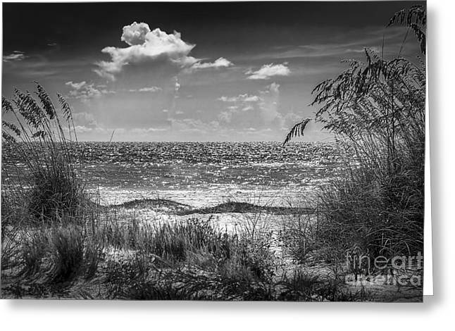 On A Clear Day-bw Greeting Card by Marvin Spates