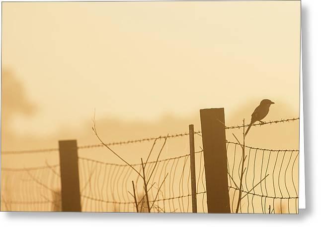 On A Foggy Morning A Loggerhead Shrike Greeting Card by Maresa Pryor