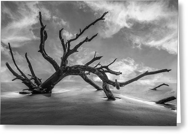 On A Misty Morning In Black And White Greeting Card by Debra and Dave Vanderlaan