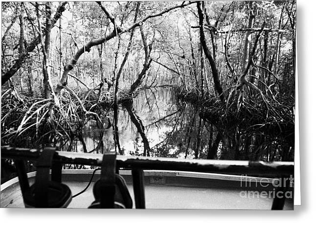 On Board An Airboat Ride Through A Mangrove Jungle In Everglades City Florida Everglades Greeting Card by Joe Fox